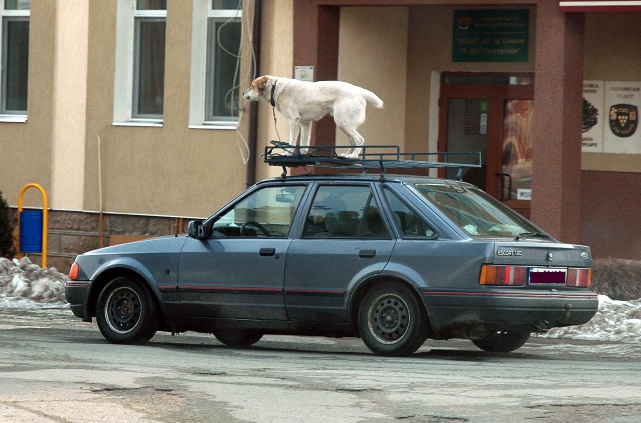 куче на кола
