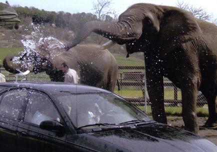 слон автомивка